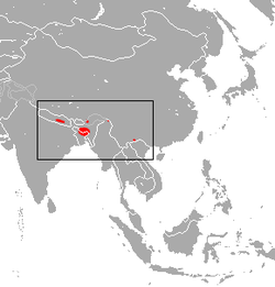 Little Nepalese Horseshoe Bat area.png