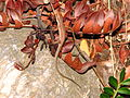 Lizard-greece-alonisos-0a.jpg