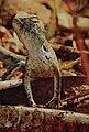 Lizard photos.jpg