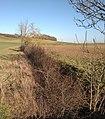 Loutre Noire (16) à Juvrecourt (M-et-M).jpg
