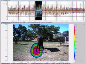 File:Loxodonta africana nasal rumble visualized with acoustic camera (25fps) - pone.0048907.s001.ogv