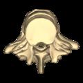 Lumbar vertebrae - close-up - superior view.png