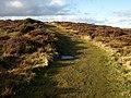 Lydeard Hill (2) - geograph.org.uk - 1140784.jpg