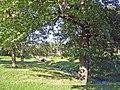 Lyme Handley, Bollinhurst Brook in Lyme Park - geograph.org.uk - 263426.jpg
