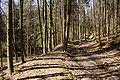 Mühlgraben-Bleichsee.JPG