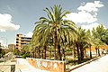 MADRID A.V.U. JARDIN-PARQUE DE PEÑUELAS PALMERAS - panoramio - Concepcion AMAT ORTA… (4).jpg