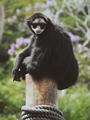 Macaco de óculos.png