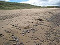 Machrihanish Beach - geograph.org.uk - 484754.jpg