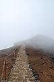 Madeira-01-0090 (7337222512).jpg