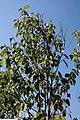 Magnolia x Pink Goblet 3zz.jpg