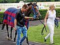 Magyar Derby győztes lova 2016 Merion.JPG