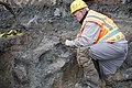 Mammoth bones found at OSU expansion of Valley Football Center - DSC 0408 - 24022806033.jpg