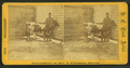Man and cow in corner of yard, by S. C. Reed.png