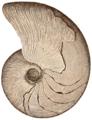 Marcellus Cephalopod 1896-Dana-ManGeol-Fig917.png