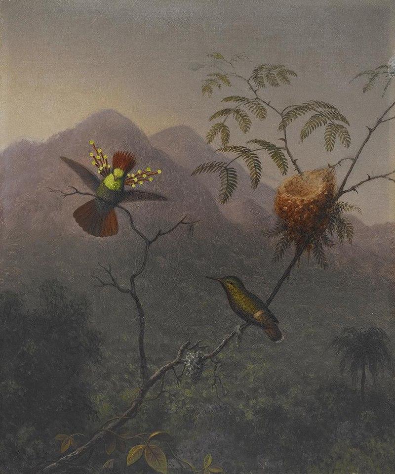 Мартин Джонсон Хид - Хохлатая кокетка - 2006.86 - Музей Хрустальных мостов Америки Art.jpg