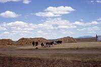 Martin de Yeltes-Récolte du blé-Aire de battage-1967 08.jpg