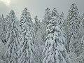 Massif forestier de Ban-sur-Meurthe-Clefcy enneigé.jpg