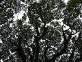 MataasnaKahoyjf0291 29.JPG