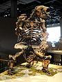 Megalonyx jeffersonii - Natural History Museum of Utah - DSC07263.JPG