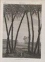 Memphis. Vue des ruines, prise du sud-est (NYPL b14212718-1268171).jpg
