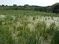 Merzse Marsh Nature Reserve, 2016 summer, Hungary.jpg
