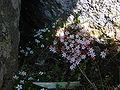 Minik çiçekler.JPG