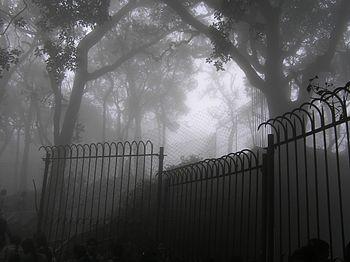 Mist at ooty.jpg
