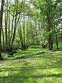 Mokřanský potok, pod Klášterním rybníkem II.jpg