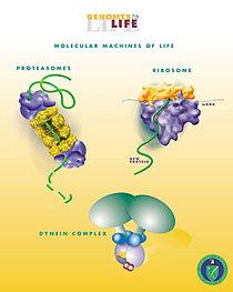 Биоинженерия доклад по биологии 3319