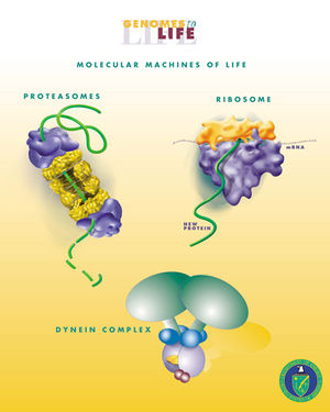 Molecular machine - Some biological molecular machines