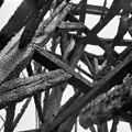 Molen nr. 2 na de brand, details - Kinderdijk - 20125349 - RCE.jpg