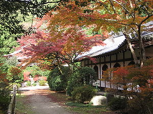 Daigo-ji - Autumn color from Acer palmatum (momiji) at Daigo-ji
