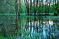Morava's flooded forest 03.jpg