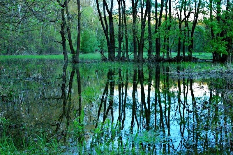 Morava's flooded forest 03