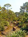 Morikami Museum and Gardens - Creek Landscape.jpg