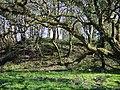 Motte at Cas-lai-Hayscastle - geograph.org.uk - 1248619.jpg