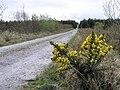 Mountain Common - geograph.org.uk - 407643.jpg