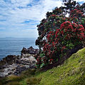 Mt. Maunganui Oceanside (6004156183).jpg