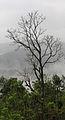 Munnar - views from Munnar (39).jpg
