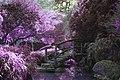 Mystical garden.jpg