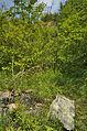 Národní přírodní památka Růžičkův lom, Čelechovice na Hané, okres Prostějov (05).jpg