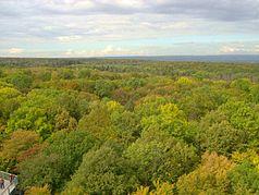 Blick vom Baumkronenpfad an der Thiemsburg über den südlichen Hainich