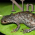 N is for Newt.jpeg