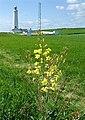 Nash Point Lighthouse - geograph.org.uk - 1287772.jpg