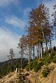 National nature reserve Serak-Keprnik - Jeseniky, Czech Republic 07.jpg