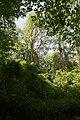 Nationalpark Donau-Auen Lobau Biberhaufen Mai 2016 02.jpg