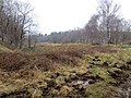 Nature Reserve on the bog that used to be a railway yard^ March 2013 - panoramio.jpg