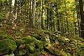 Nature reserve Ptaci stena in autumn 2011 (11).JPG