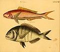 Naturgeschichte in Bildern mit erläuterndem Text (Taf. LXXXVIII) (6059220228).jpg