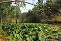 Naturpark Schremser Hochmoor - ehm Torfstich 2015 08.jpg